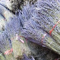 lavendel-bloemen